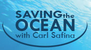 Saving the Ocean